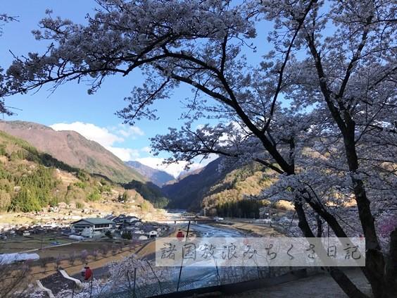 """【長野】赤石岳をバックに3千本の桜 """"大西公園"""" ★★★★"""