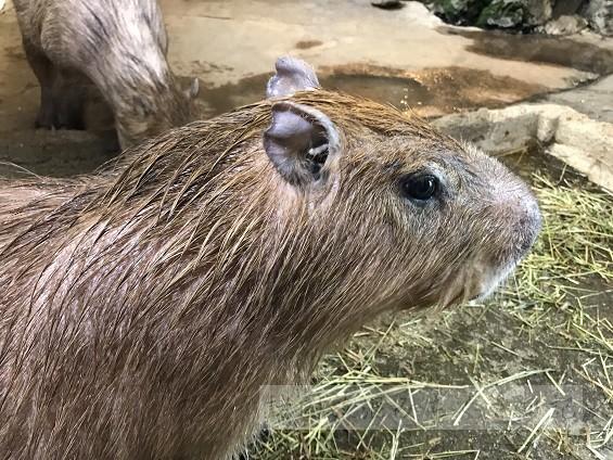 【群馬】温泉熱を利用した珍動物が揃う 草津熱帯圏 ★★★+